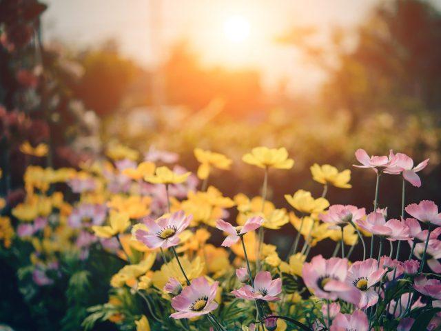 Le printemps s'invite dans votre jardin