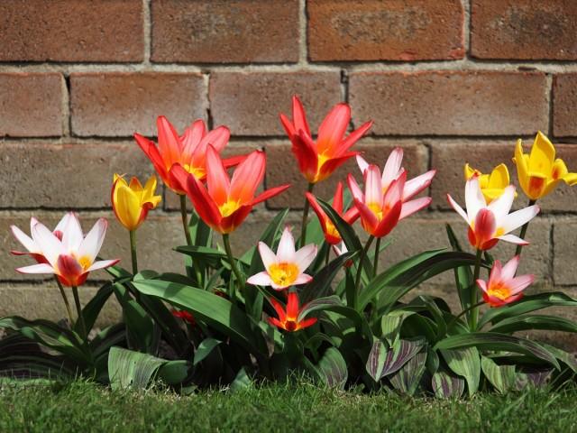 Planter, nettoyer, semer : tout le jardin au mois d'août