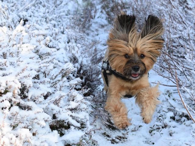 Les animaux domestiques durant l'hiver