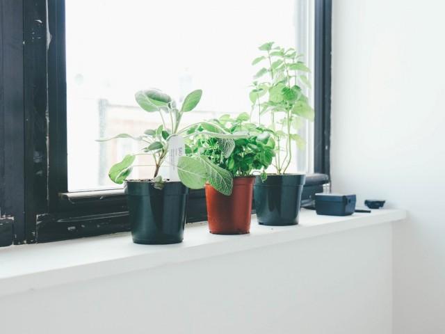 Plantes d'intérieur : Que choisir ?