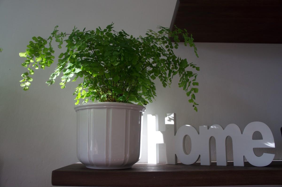 comment décorer son intérieur avec des plantes ? - bon plan maison