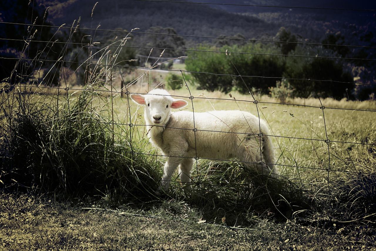 Installez vous-même votre grillage à moutons.